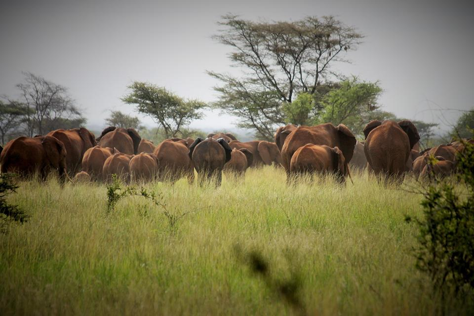 Meru-National-Park_Elephant_Kenia.jpg