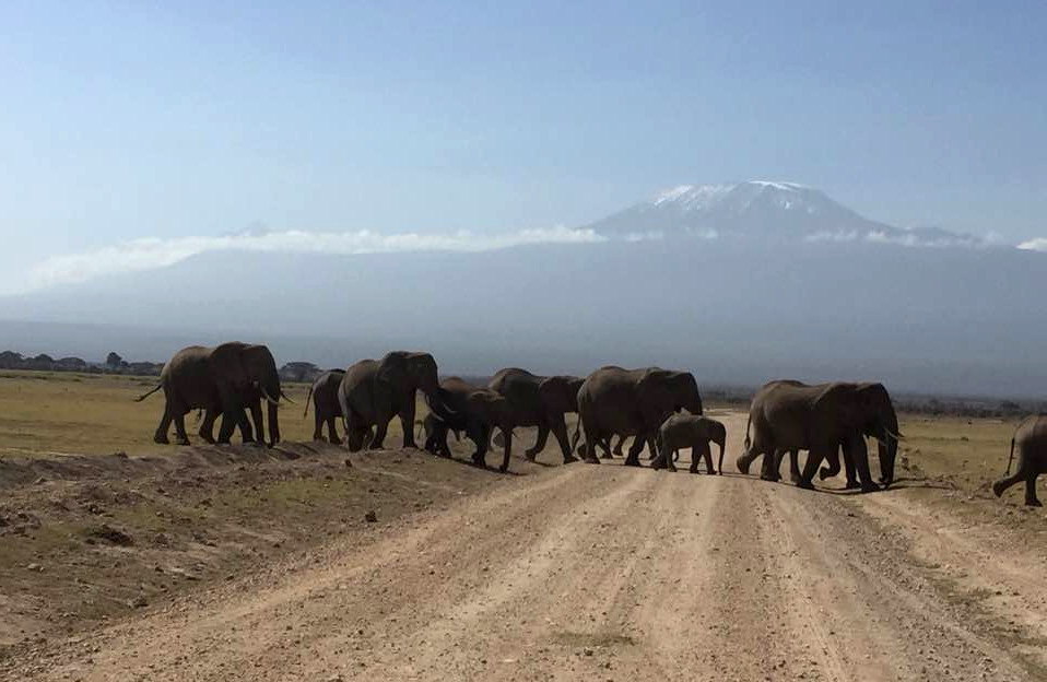 elephants-in-amboseli-national-park